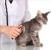 Ветеринарные клиники в Зеленокумске